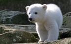 La mort de Knut enfin expliquée