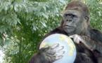 Le message de Koko à la COP21