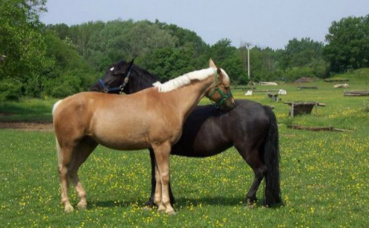 Un exemple de coopération dans le règne animal. Photo (c) Alex Brollo