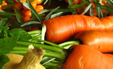 Légumes écologiques cultivés. Photo © Elina Mark