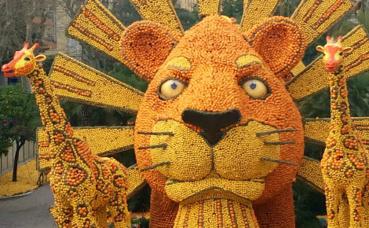 Le roi lion en agrumes. Photo: Pauline Maheu-César