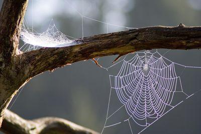 Le miracle de l'émerveillement : l'araignée appliquée