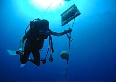 Plongeur manipulant une 'poche de moules' - Photo (c) DR