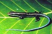 Biodiversité: Les amphibiens et les reptiles d'Europe en péril