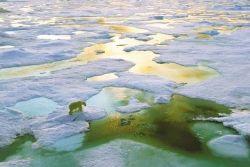 4e année polaire internationale : Comment éviter la fonte des glaces polaires ? (3/4)