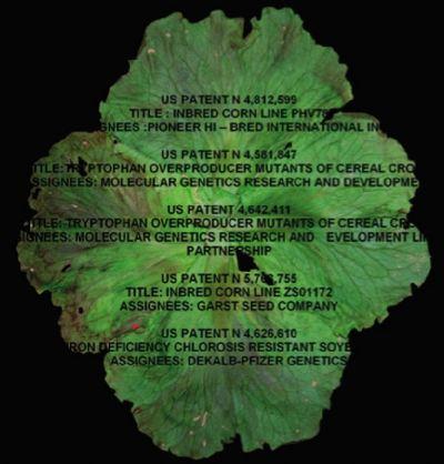 © Maria Rebecca Ballestra, US Food Patents, 2009,  impression Lamba,  50x50 cm