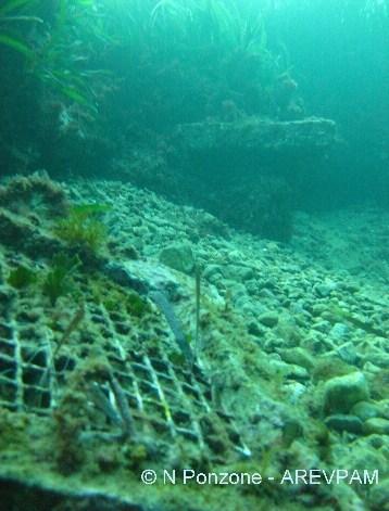Les vagues dévoilent les installions du pionnier de G. Cooper en matière de posidonie à Hyères