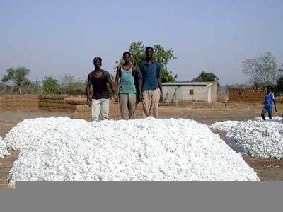 L'or blanc du Burkina Faso. Photos (c) Sama