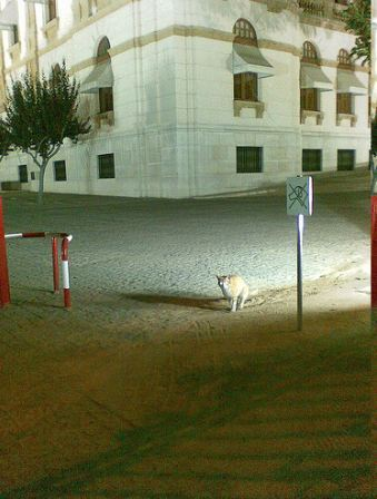 Photo (c) Gustavocarra