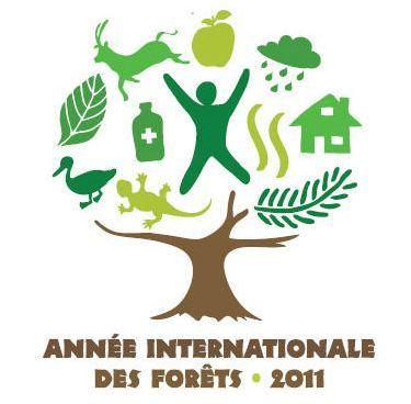 1,6 milliard de personnes menacées par la dégradation des forêts mondiales