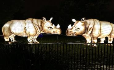 Ces deux rhinocéros animés semblent vouloir se faire la bise. Photo (c) Christophe de Bourmont