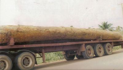 Camion transportant les billes de bois vers le port de Douala pour l'exportation (c) Simon Yefou