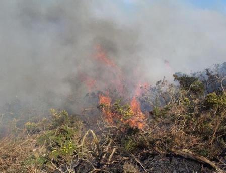 Un brûlage dirigé de la lande aura lieu avant la fin du mois de mars. (c) DR.