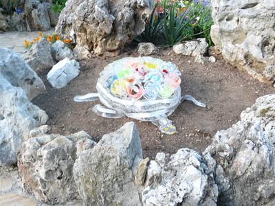 Une tortue dans un jardin... (c) Islem Salmi
