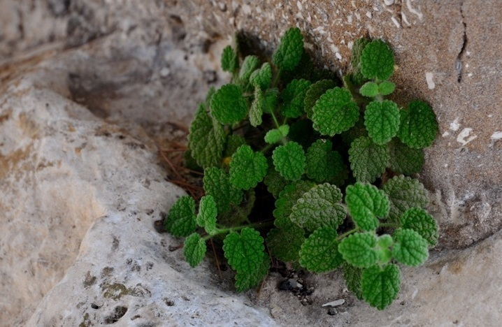 Le vert (vers) de pierre ! Photo (C) Ibrahim Chalhoub