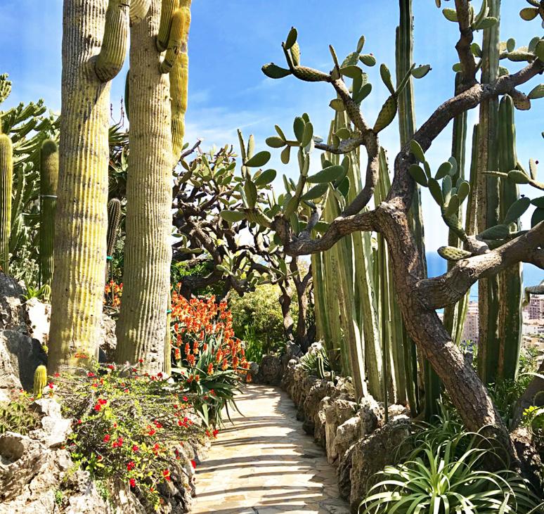 """Superbe allée bordée de """"cactus cierge"""" une espèce de cactus colonnaire native d'Argentine et répandue en Amérique du Sud. Photo (c) Charlotte Longépé"""