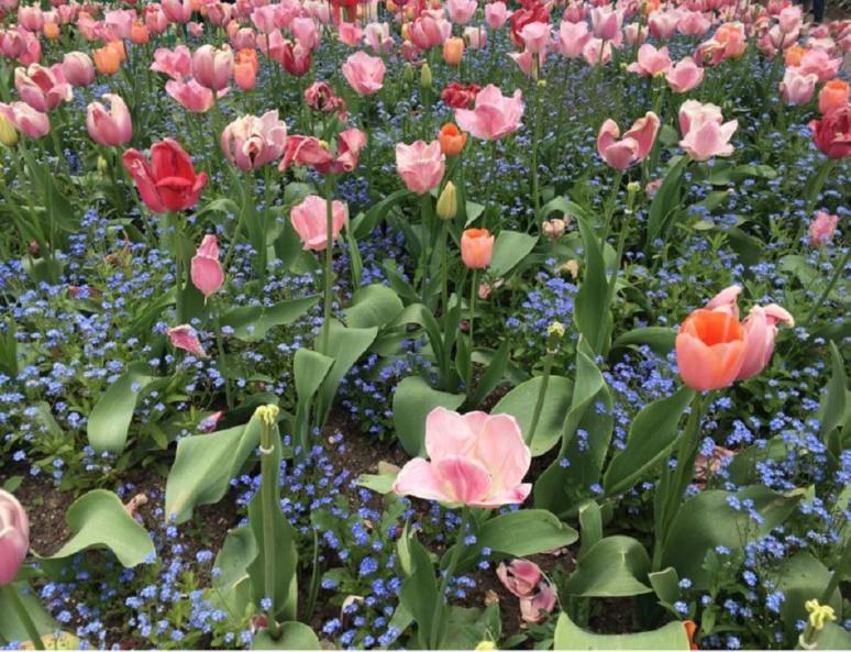 Un des nombreux parterres de fleurs du Clos Normand. Photo (c) Anne-Sophie Leroy