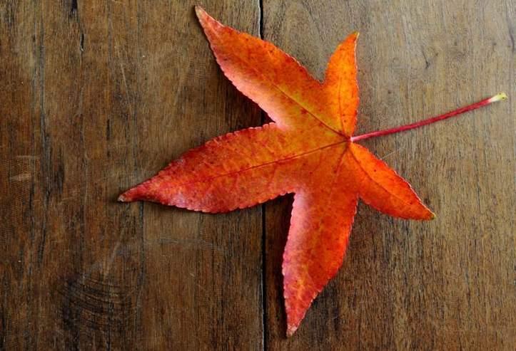 Voici l'automne! Photo (c) Ibrahim Chalhoub
