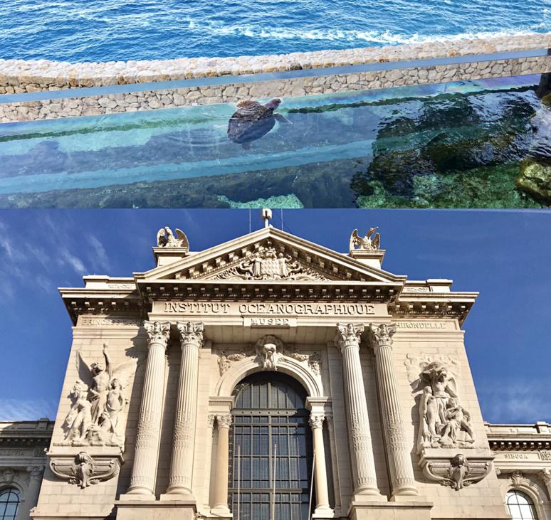 Nouveau bassin aux tortues marines et la majestueuse entrée du Musée Océanographique de Monaco. Photos montage (c) Charlotte Longépé.