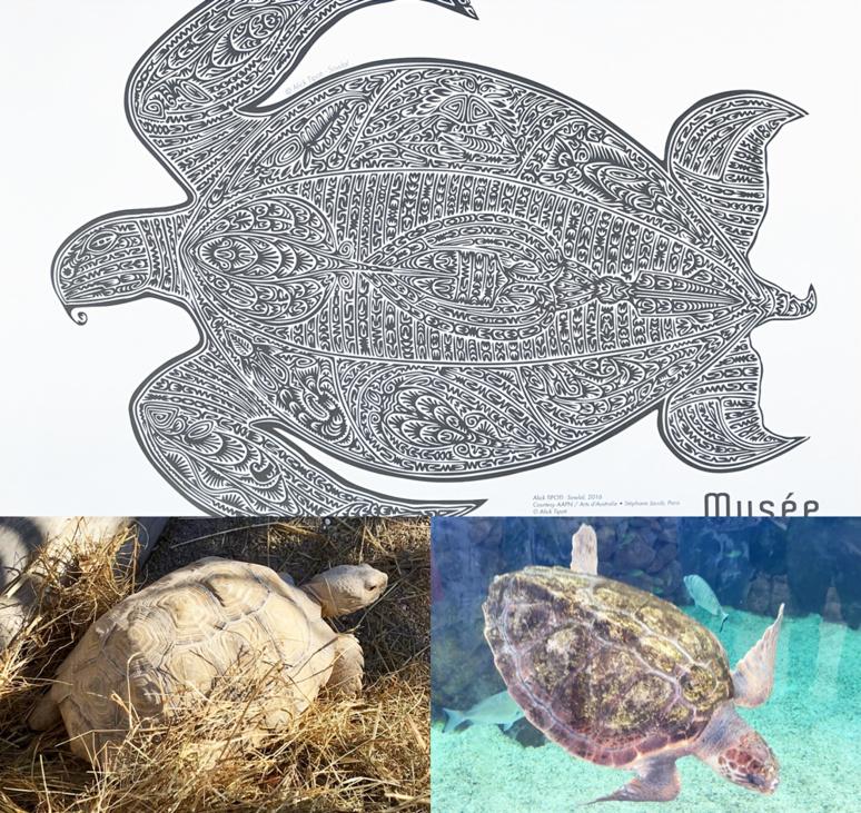 Sowlal, lithogravure d'une tortue composée elle-même de créatures marines créee par Alick Tipoti dans le cadre de l'exposition TABA NABA en 2016; tortue du Mali située sur la terrace du musée et tortue caouanne. Photo (c) Charlotte Longépé.