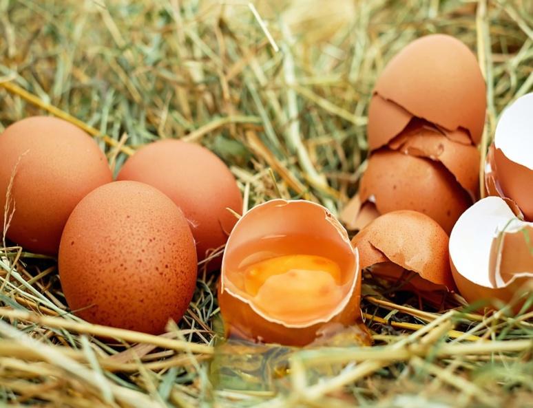 Il est préférable de choisir des oeufs de poules élevées en plein air ou bio. (C) Ilona