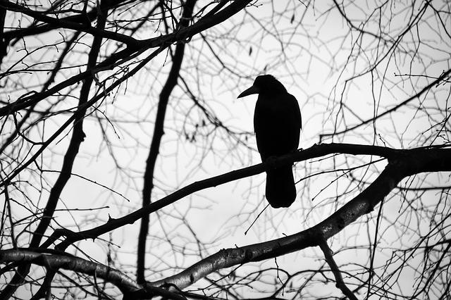 Le monde en noir et blanc (c) kytalpa de Pixabay