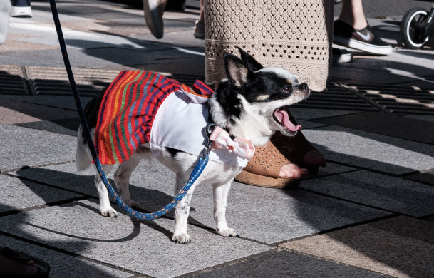 Un chien en jupe ©Florent Guérout