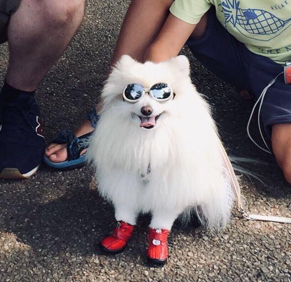 Mochi, le chien du parc de Ueno ©Florent Guérout
