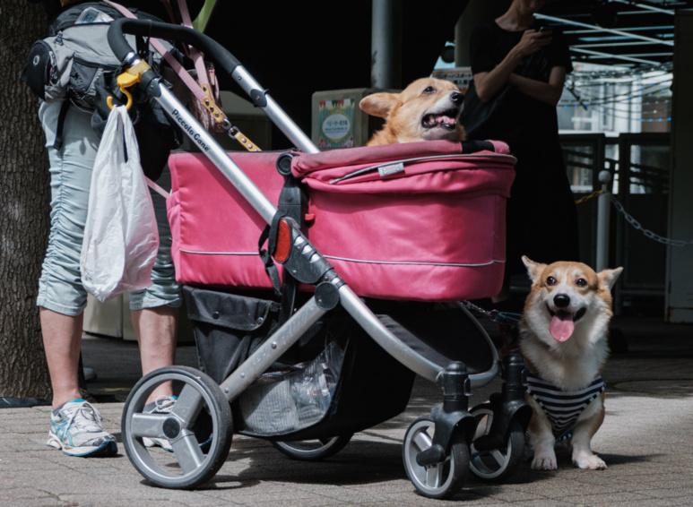 Deux chiens une poussette ©Florent Guérout