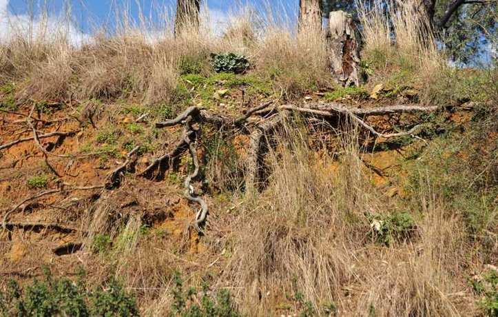 Pas d'arbres sans racines! Photo (C) Ibrahim Chalhoub