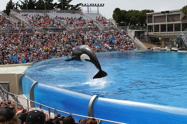 Orque en captivité dans un parc aquatique (c) Pixabay