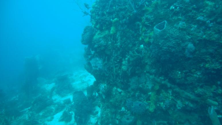Récif corallien de Martinique (c) Louise Guthauser