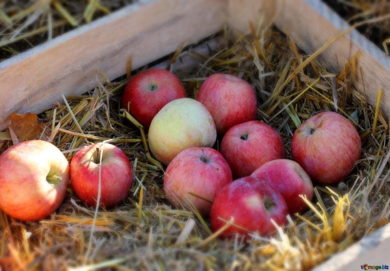 """""""Une véritable découverte du fruit était proposé par le biais d'une exposition pomologique, regroupant toutes les variétés et parfums de nos jardins et vergers. """" (c) torange.biz"""