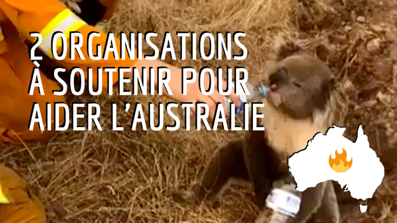 Photo d'un pompier venant en aide à un koala (crédit photo : Le Huffington post