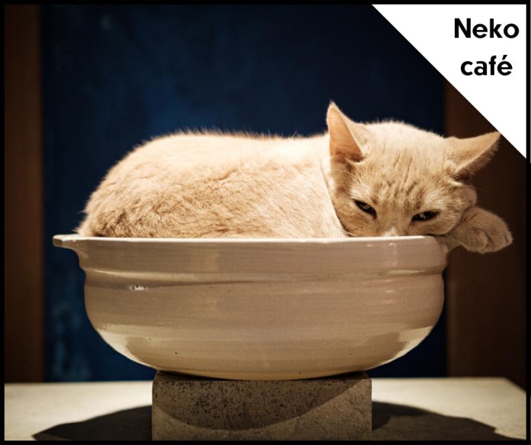 Un chat se repose dans un vase au fond de la salle. ©Florent Guérout