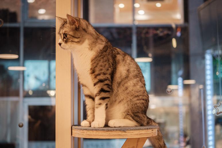 Un chat regarde passer les clients ©Florent Guérout