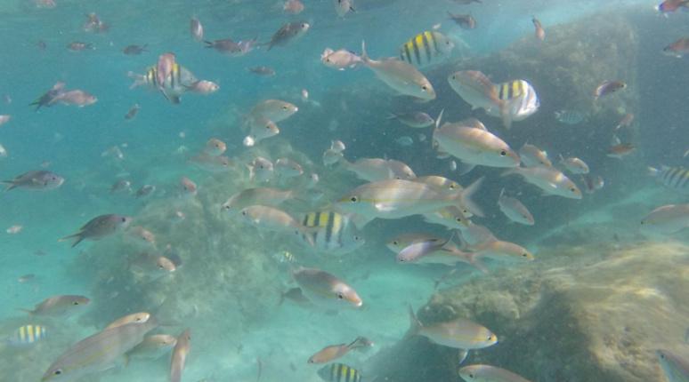 Peuplé d'une variété incroyable de vie sous-marine, le lieu se révèle magique. Capture d'écran Youtube.