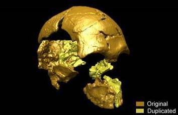 Reconstitution 3D du crâne de Tam Pa Ling. (c) F. Demeter / MNHN