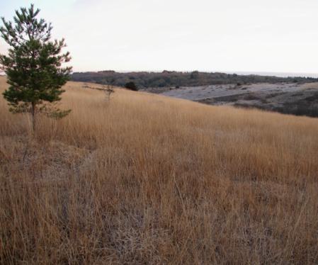 Le terrain des landes après fauchage, en hiver./ © Ronan Le Mener, Association Cicindèle