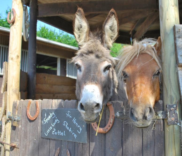 L' âne et sa femme  jument (c) DR