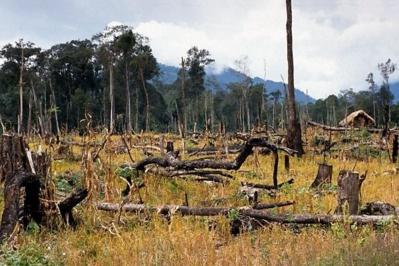 La déforestation, le mal du siècle, une sérieuse menace. Photo (c) ETJ