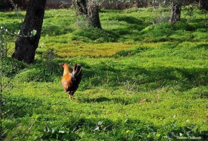 Beauté de la nature! Photo (C) Ibrahim Chalhoub