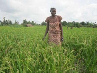Une des femmes bénéficiaires de la valorisation sur son champ de riz. Photo (c) Alain Tossounon