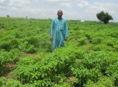 Un des bénéficiaires du programme PANA1 dans son champ de piment. Photo (c) AT