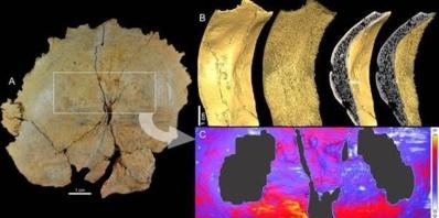 Vue postérieure de l'os occipital de l'enfant néandertalien La Ferrassie 8 (A) et étude de ses structures internes révélées grâce à l'imagerie à rayons X à haute résolution (50 microns): détail des structures sur tout l'occipital (B) et distribution de l'épaisseur de la couche externe de l'os dans la zone de la fosse sus-iniaque (C, correspondant au rectangle blanc en A).