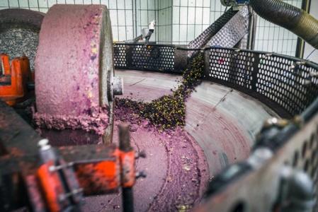 L'huile d'olive vierge extra est extraite uniquement par des moyens mécaniques (ici à Mola di Bari, dans les Pouilles, en Italie). Shutterstock