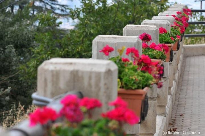 La route des fleurs! Photo (C) Ibrahim Chalhoub