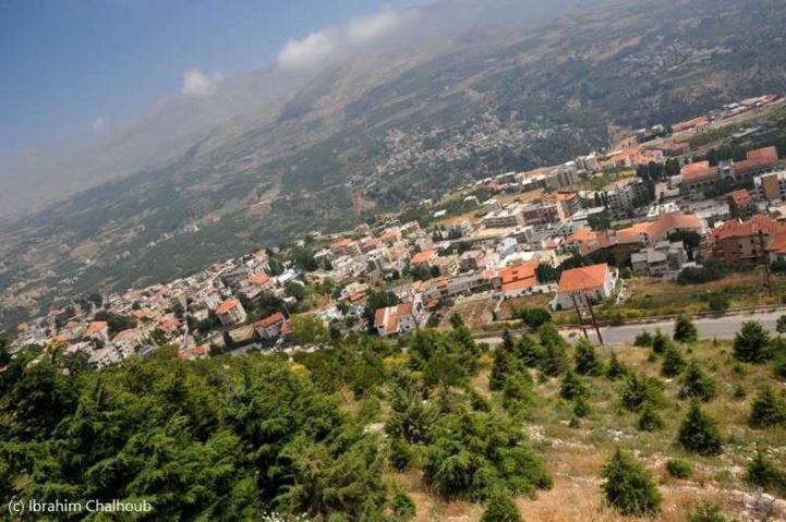 Entre les arbres des montagnes! Photo (C) Ibrahim Chalhoub