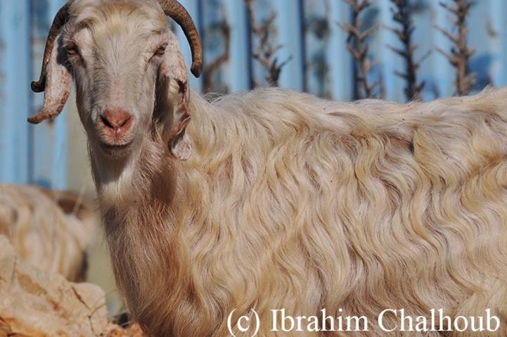 Droit à une photo! Photo (C) Ibrahim Chalhoub