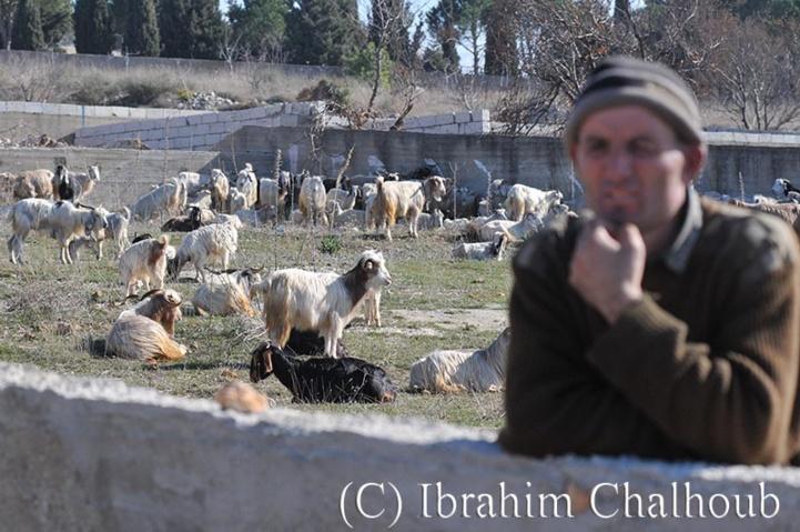 Bain de soleil! Photo (C) Ibrahim Chalhoub